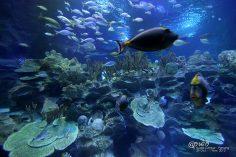 เที่ยวกัวลาลัมเปอร์ แวะชม Aquaria KLCC