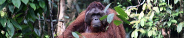 Semenggok Orangutan Rehabilitation Centre